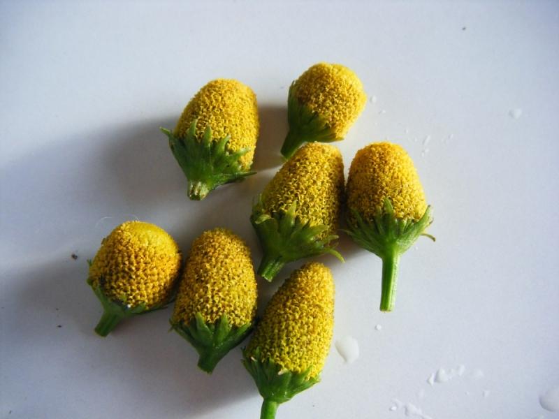 Flores Blancas Png 800 600: Les Herbes De Can Riera